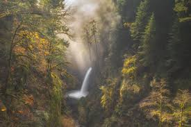 forest mist image oregon national geographic your shot photo of