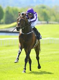 lexus cup australia melbourne cup your horse by horse guide to the race that stops a