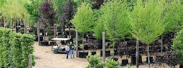 majestic trees high quality semi trees for sale