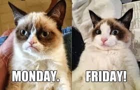 Grumpy Cat Friday Meme - grumpy cat monday vs friday on we heart it