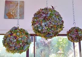 out of the planter box inspiring ideas for indoor gardens