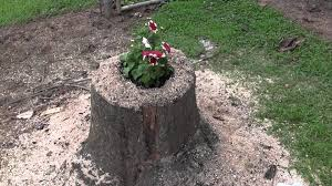How To Make A Tree Stump End Table by Turn A Treestump Into A Flower Pot With Z 1 Youtube