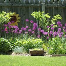 winsome landscaping ideas along a fence line backyard landscaping