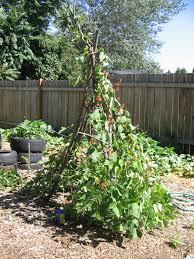 plant a teepee hip digs