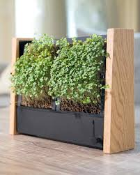 container garden ideas martha stewart