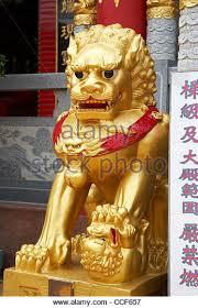 gold foo dogs guardian lion dog stock photos guardian lion dog stock images