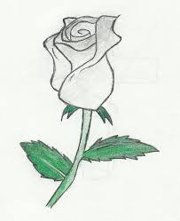 white rose drawing clip art library