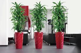 Office Plants by Greenfingers Indoor Plant Sales U0026 Maintenance El Paso Tx