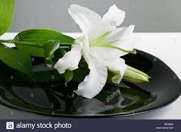 Elegant Table Settings by An Elegant Table Setting Of An Easter Lily On A Black Plate Stock
