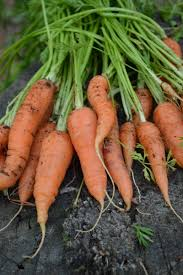 Vegetable Garden Plans Zone 7 by Gardening Tips For Zone 3 20 Vegetables You Can Grow