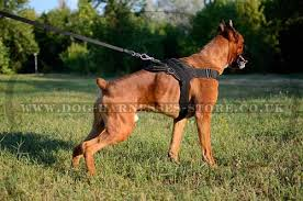 boxer dog uk dog harness uk nylon for german boxer worldwide shipping