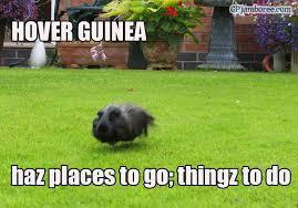 Guinea Pig Meme - photos a meme that describes your guinea pig page 2