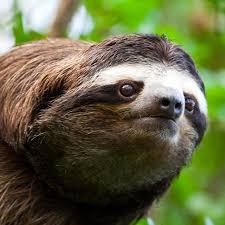 Sloth Fitness Meme - meme template search imgflip