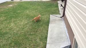 feral cats running around in our backyard youtube