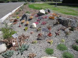 new low impact garden in sequim the desert northwest blog