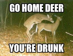 xd haha this is so funny deer meme s pinterest
