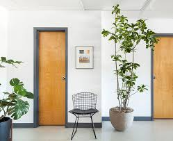 caring for indoor plants during winter u2013 design sponge