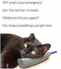 Cat Heavy Breathing Meme - dopl3r com memes 911 whats your emergency cat the red dot its