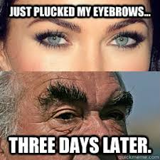 Eyebrows Meme - just plucked my eyebrows three days later eyebrows quickmeme