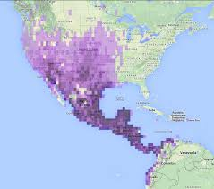 Puerto Rico World Map Great Tailed Grackle Visiting The Island Puerto Rico Ebird