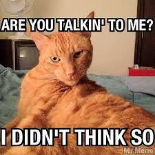 Sarcastic Cat Meme - meme cat instacat sarcasm boss photograph by lisa pearlman
