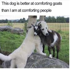 Frowning Dog Meme - 30 doggo memes that will turn any frown upside down puppers and