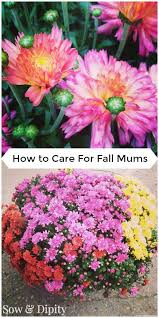 care fall mums