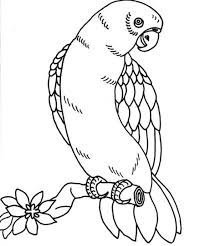 parrot coloring pages coloring page blog