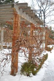 987 best winter garden images on pinterest winter garden