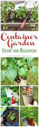 Gardening For Beginners Vegetables by Best 25 Garden Guide Ideas On Pinterest Vegetable Gardening