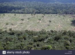 aerial view forest clearance for agriculture isolated