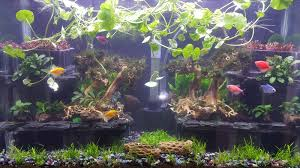 Aquascape Freshwater Aquarium Best Light For A 120 Gallon Tall The Planted Tank Forum