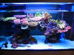 led reef lighting reviews reef tank lighting calculator gorod