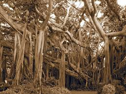 tree stock photo image of tangled forest 1860314