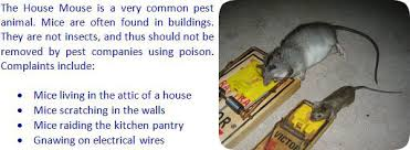 How To Get Rid Of A Skunk In Your Backyard How To Keep Mice Away From Your House Yard Garbage Shed
