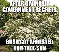 tree puns punpedia botany jokes