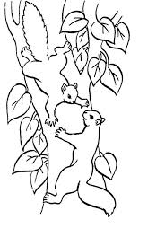 mexican fox squirrel coloring printable pages