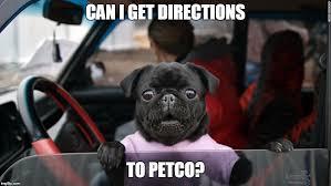 Dog Driving Meme - pug driving imgflip