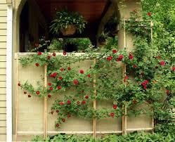 garden design garden design with climbing plants for trellis with