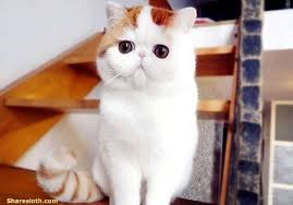 snoopy cat pictures adorable sharesloth