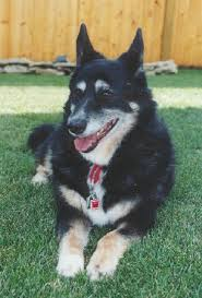 Dogs For The Blind Adoption Why A Re Homing Or Adoption Fee Is Necessary For Pet Adoptions