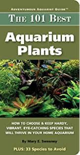 Aquascape Aquarium Plants Aquascaping Aquarium Landscaping Like A Pro Aquarist U0027s Guide To