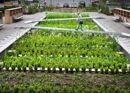 Wooden Vegetable Garden by Medicinal Herb Garden Design With Vegetable Garden Design Have