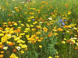 maryland native plants wildflower garden at kinder farm park university of maryland
