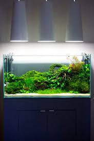 Aquarium Decoration Ideas Freshwater 1529 Best Tank Images On Pinterest Aquascaping Freshwater