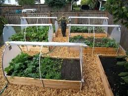 Home Vegetable Garden Ideas Vegetable Gardening At Home Home Vegetable Garden Ideas