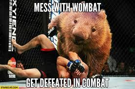 Wombat Memes - wombat memes starecat com