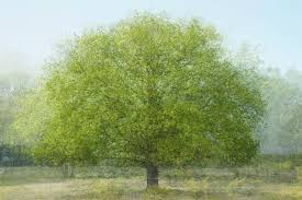 beautiful multi layered trees