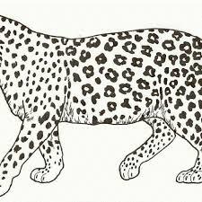 cheetah coloring pages gianfreda net