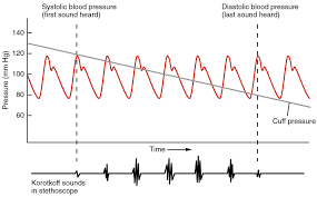 20 2 blood flow blood pressure and resistance anatomy and